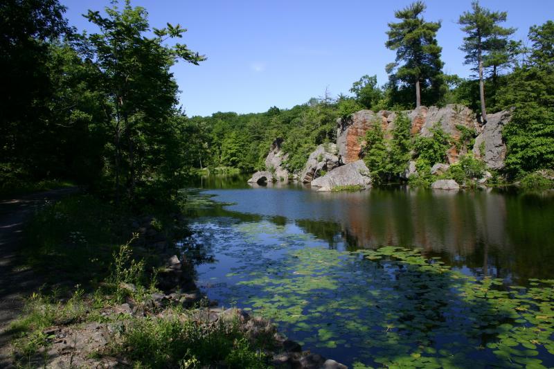 Overlooking pond shore