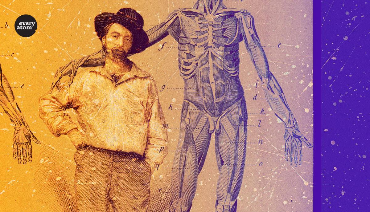 Whitman and anatomy
