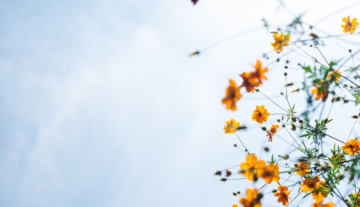 Image by Masaaki Komori of yellow flowers against a blue sky