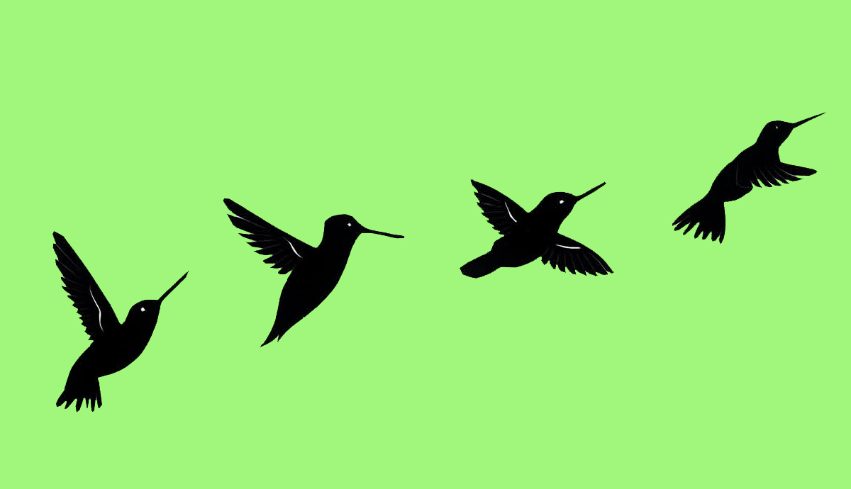 blackbirds on a green background