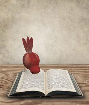 Red Bird Looking at an Open Book