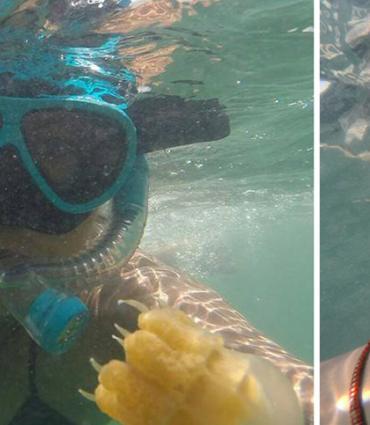 Jellyfish and swimmer