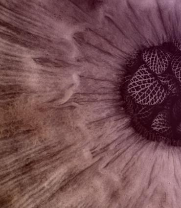an eye with leaves in the pupil