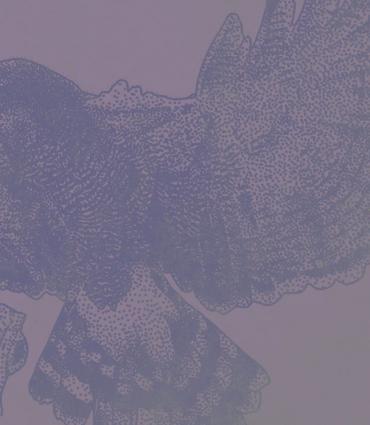a print eagle
