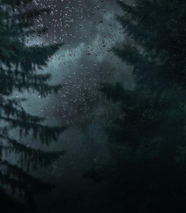 star filled dusk night through some trees