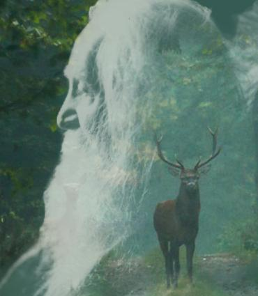 Profile of Whitman over a forest scene
