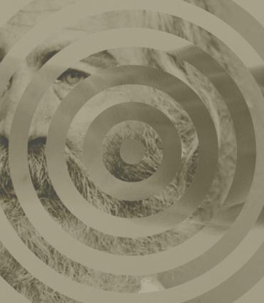 Whitman with a spiral