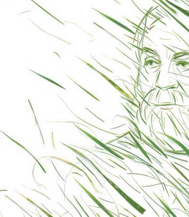 Whitman as grass, grass as Whitman