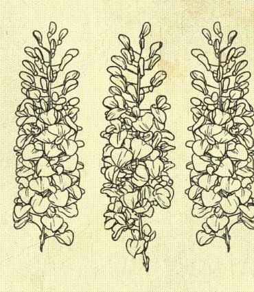 hand drawn lilacs