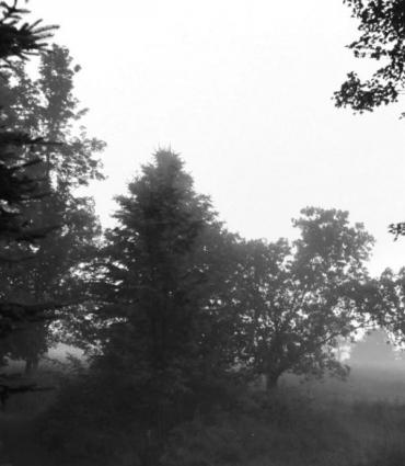 black and white image of trees