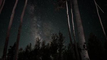 Dark forest sky