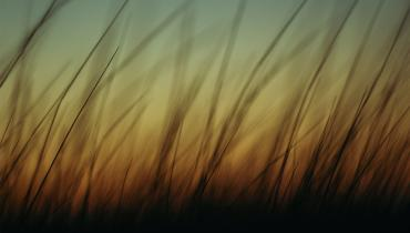 Sunset with grass in foreground