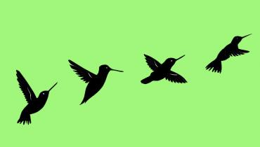 blackbirds on a green background