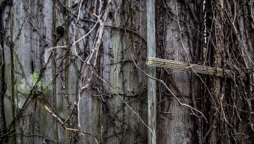 wooden wall with dead vines