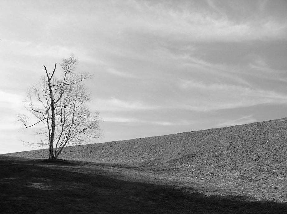 Image of bare tree